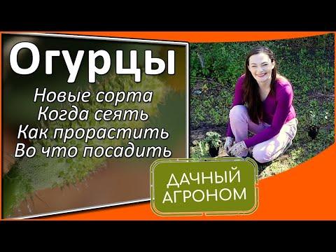 Огурцы: Новые сорта / Когда сеять / Как прорастить / Во что посадить