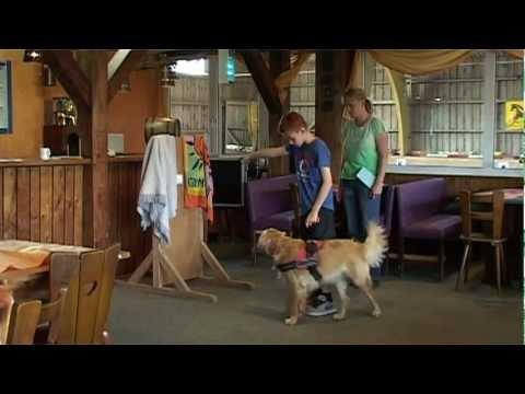Hundezentrum CATU: Ausbildung zum Assistenzhund und Diabetikerwarnhund