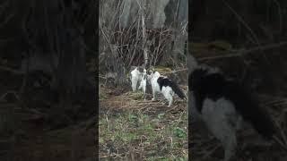 Драка кошек, Говорящие коты на 1 мая