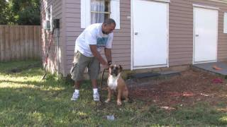 Dog Training & Canine Health : How To Train A Dog To Sniff Out