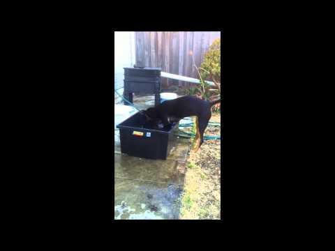 Annie Water Tub