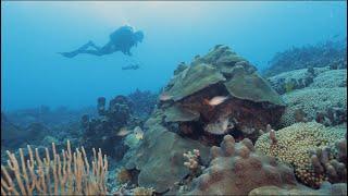 E-DNA to study marine ecosystems in Martinique MaCoBioS