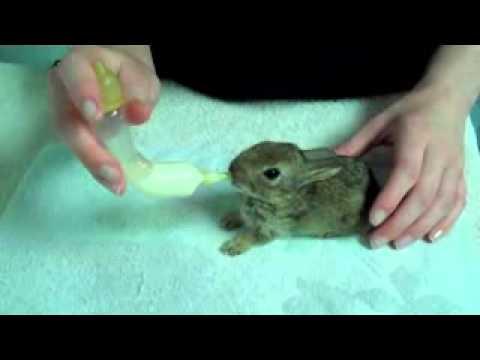 Hand Feeding Baby Rabbit & Hedgehog Using Catac Products