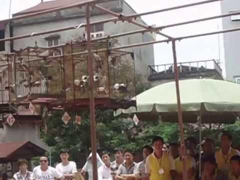 Hội thi tiếng hót chim chào mào Thanh Trì mở rộng lần thứ 1(tốp 10 e xuất sắc)