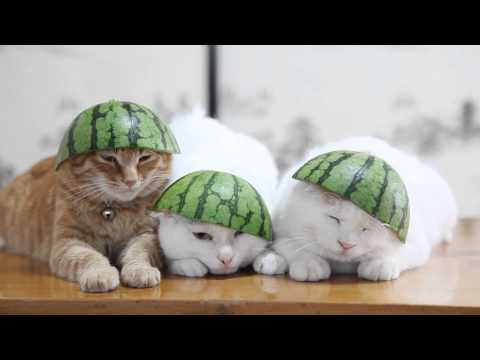 Thumbnail for Cat Video Watermelon Heads