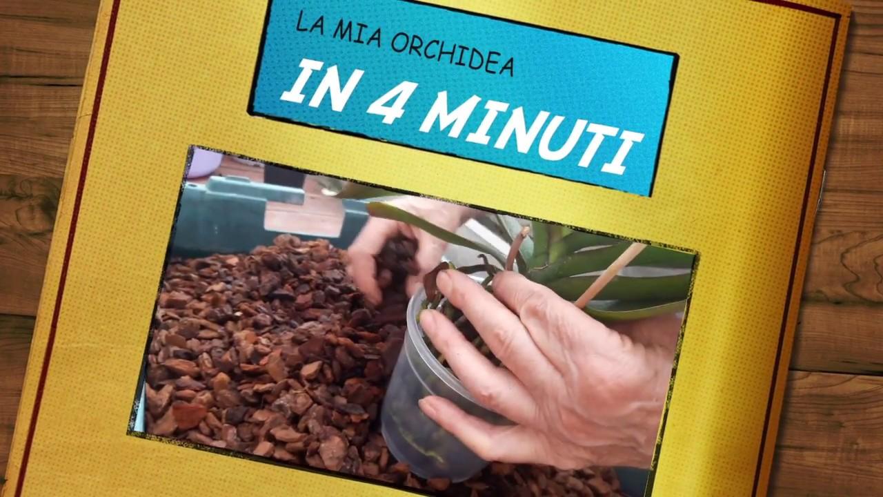 Download Come prendersi cura di un'orchidea in 4 minuti