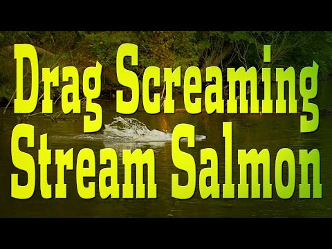 Great Lakes River-Run Salmon Fishing!