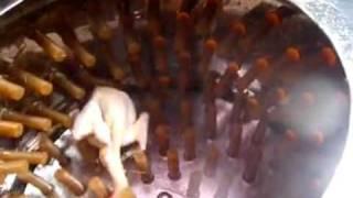 Перосъёмная машина для ощипывания кур