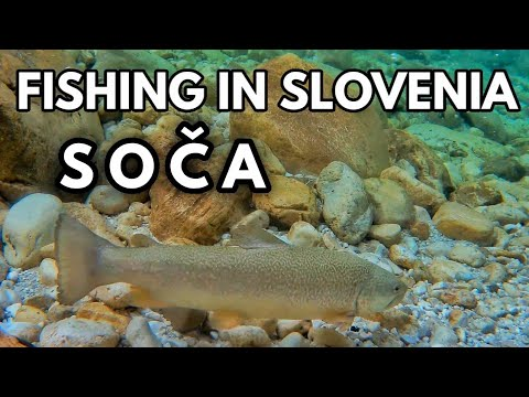 Upper Soca Fly Fishing For Rainbow Trout - Marble Surprise?!