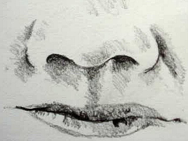 Line Drawing Of Human Face : Copy of drawing the human face lessons tes teach