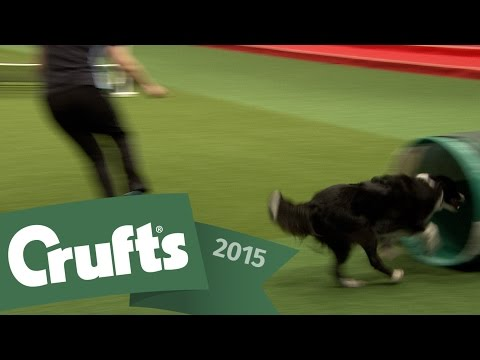 FAIL! Woman's embarrassing fall during Agility routine | Crufts 2015