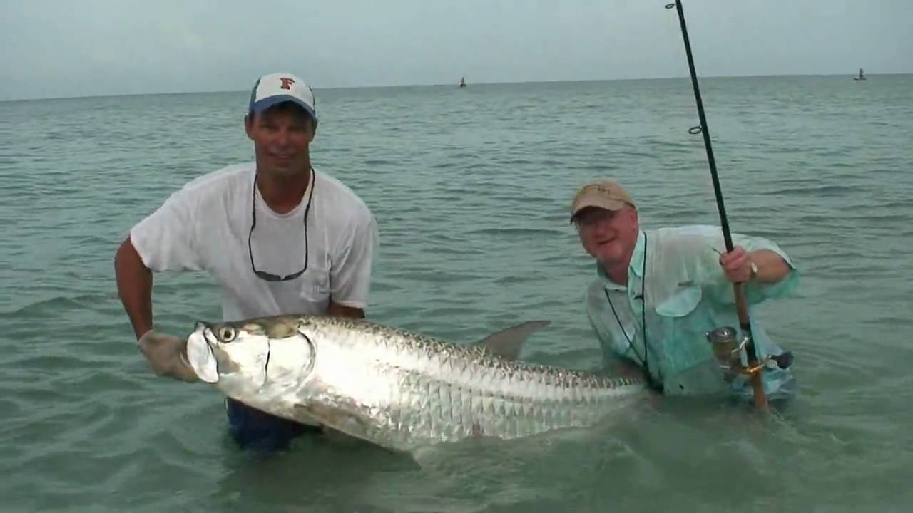 Tarpon fishing on casey key florida youtube for Florida tarpon fishing