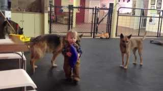 Aggressive Dogs Angelo Working Dogs