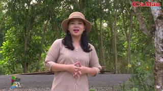 Khám phá Cà Mau: Điểm du lịch sinh thái Tư Nhiệm