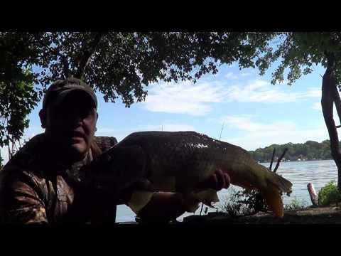 carpfishing ( pesca de carpas ) en  fox river