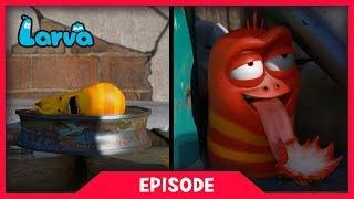LARVA - A DAY IN THE LIFE OF LARVA | Cartoons For Children | Larva Cartoon | LARVA Official