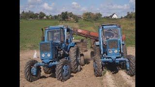 Как копать картошку картофелеуборочным комбайном ККС2. Тракторы МТЗ-52