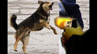 В центре Самары мужчины расстреляли собак и их хозяина-инвалида