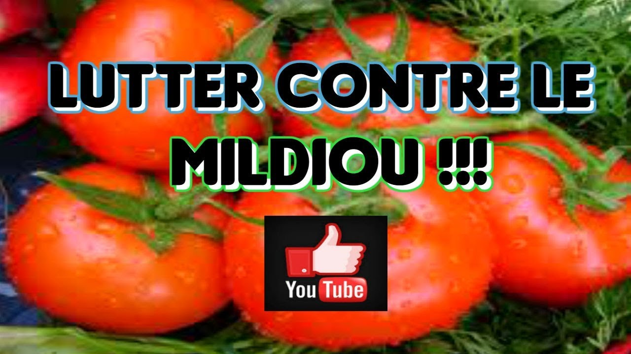 comment eradiquer mildiou sur mes tomates en 13 astuces de jardin youtube. Black Bedroom Furniture Sets. Home Design Ideas