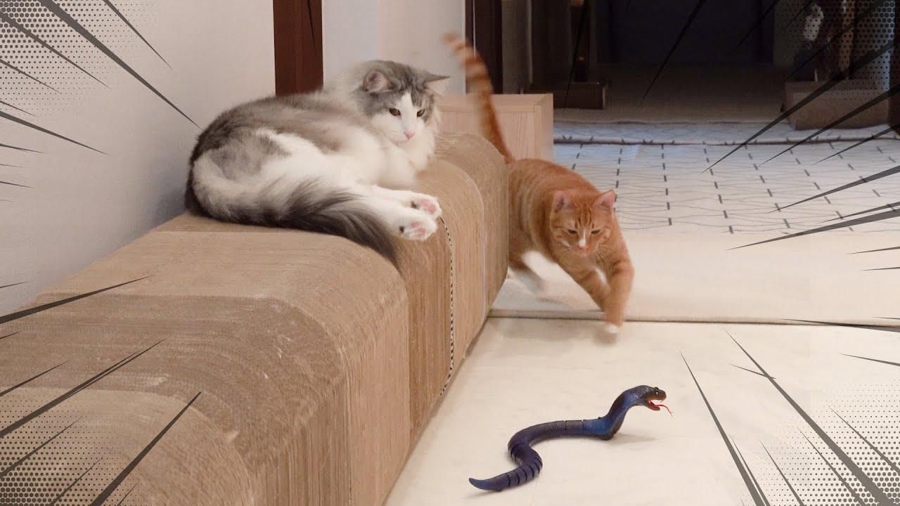 코브라를 본 강아지와 고양이의 반응!!