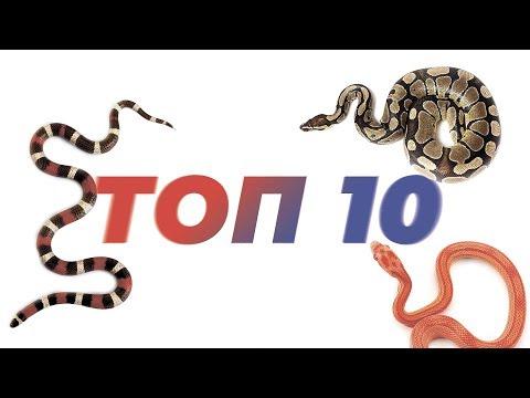 ТОП 10 Змей для содержания дома.
