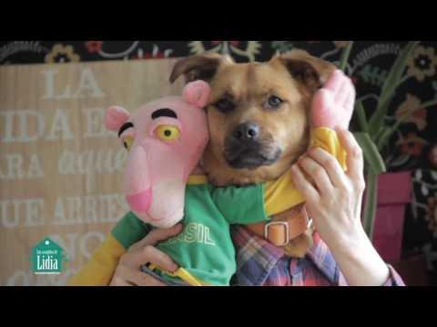 """""""Tu perrito"""" - versión de DESPACITO - LUIS FONSI FT. DADDY YANKEE"""