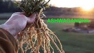 Common Vitamins & Supplements - ASHWAGANDHA