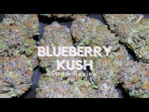 Blueberry Kush Strain Review - ISMOKE Live from Amsterdam