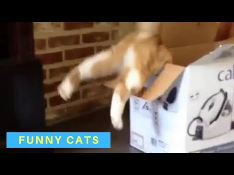 Funny Cat Videos - Cats Being Cats