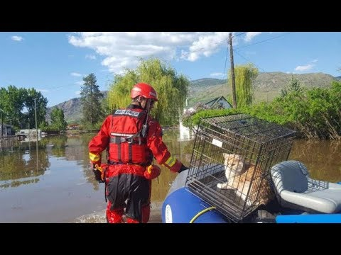 Pet search in flooded Grand Forks, B.C.