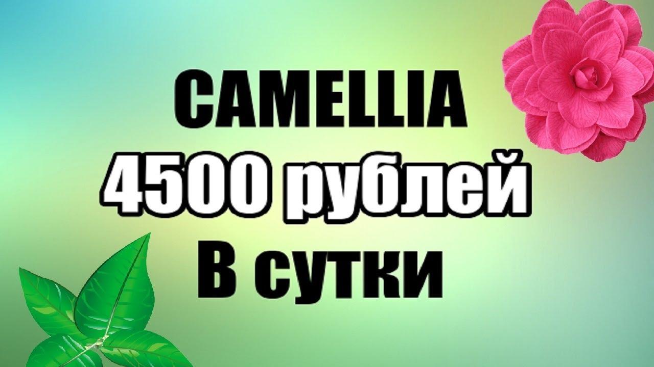 Camellia- Заработок 4500 Рублей Каждые Сутки на Автомате! | автоматический заработок с мобильного
