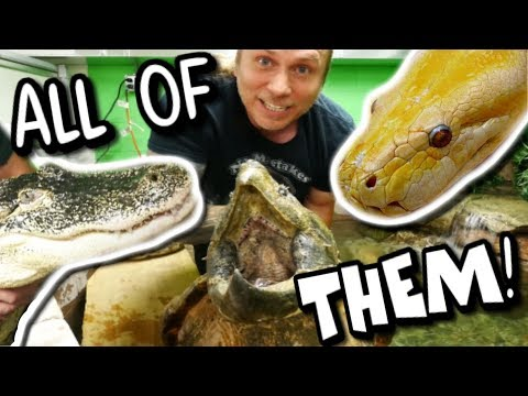 ALL MY PET REPTILES IN ONE VIDEO!!!! Brian Barczyk