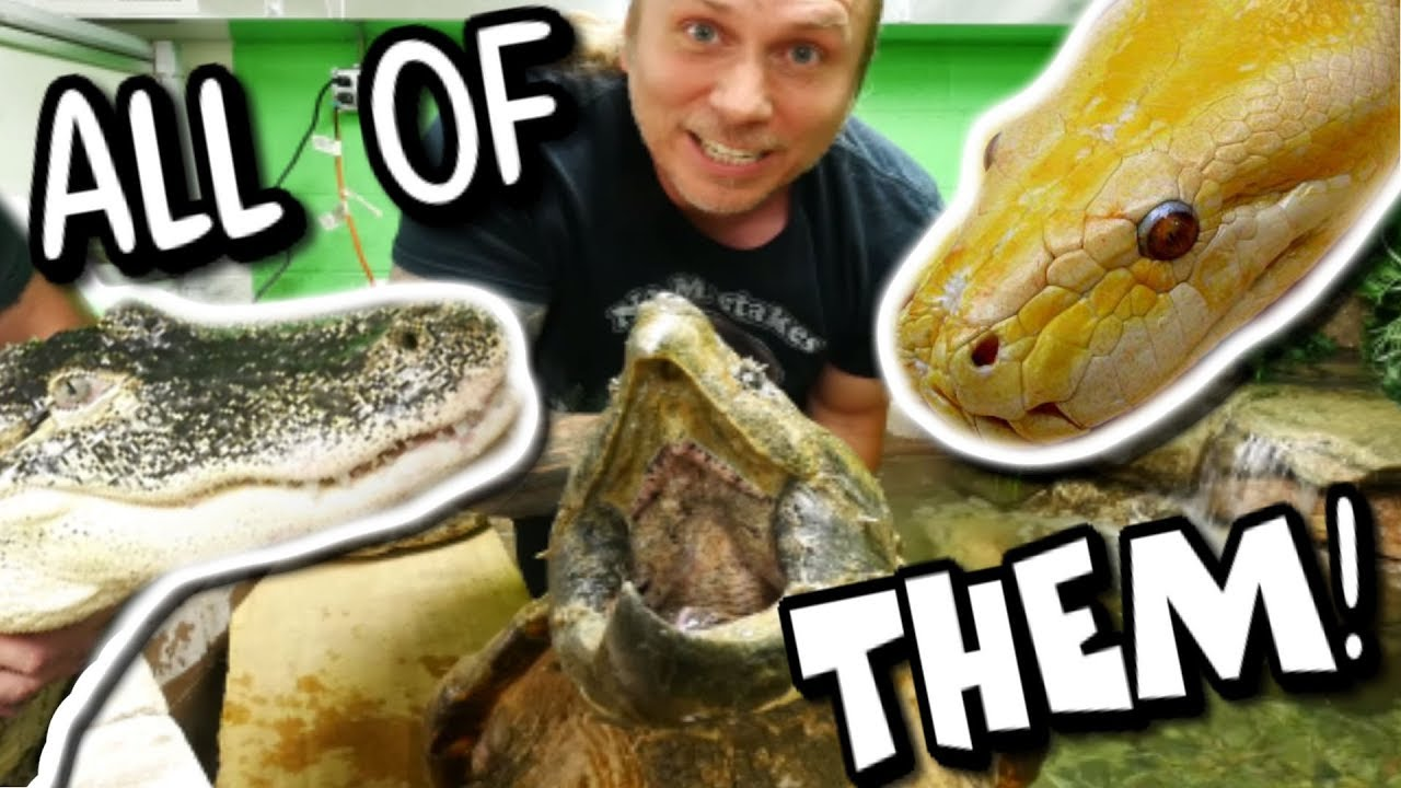 ALL MY PET REPTILES IN ONE VIDEO!!!! | BRIAN BARCZYK