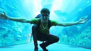 Zoológico Bajo el Agua en DUBAI (HotSpanish Vlogs)