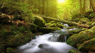 Beautiful Instrumental Hymns about the Peace and Comfort of God | Relaxing, Soothing, Peaceful