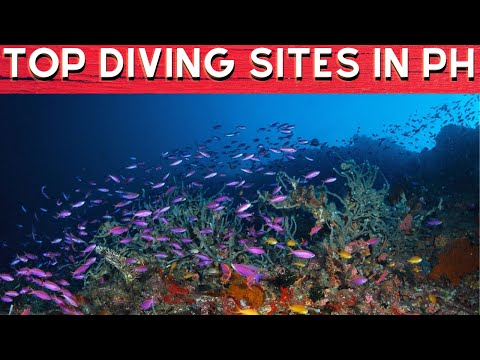 Top 10 Diving Sites in The Philippines Video