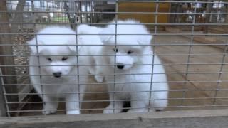 撮影日2014年11月8日 アライ畜犬牧場 http://www.araichikuken.com.