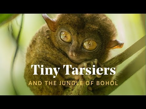 WE FOUND TINY TARSIERS IN THE PHILIPPINES 🐒🌿