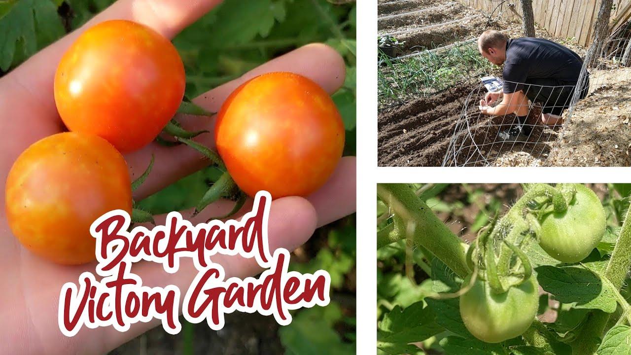 Backyard Victory Garden