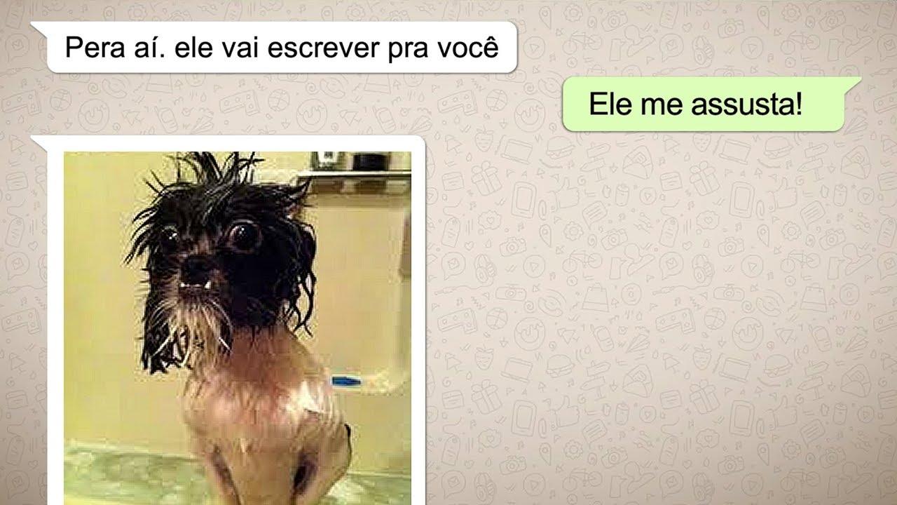 9 Mensagens De Whatsapp Do Seu Cachorro Para Rir