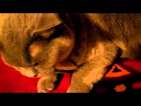 Cat On A War Rug