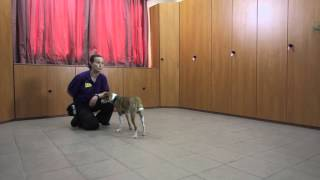 Session 7 -  Teaching Your Dog To Fetch