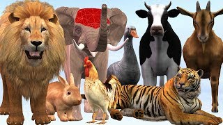 Wild Animals And Domestic Animals Names & Sounds For Children - Cartoon Kidzee Rhymes