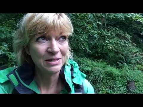 Forest Bathing, Japanese Style between Aberporth and Llangranog, Wales Coast Path -