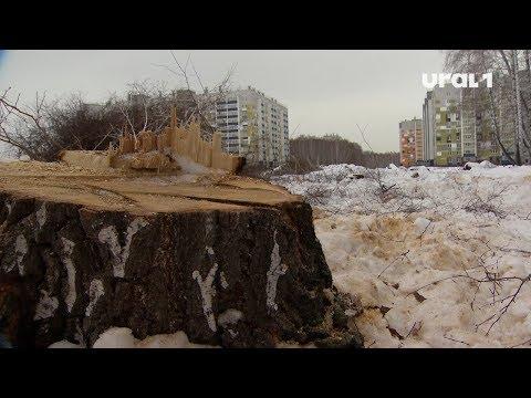 Проверка идёт, а вырубка не прекращается: в На северо-западе Челябинска исчезает лес