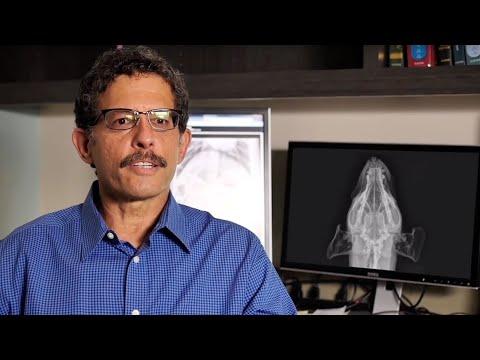 Sound - Veterinary DR Veterinary Ultrasound