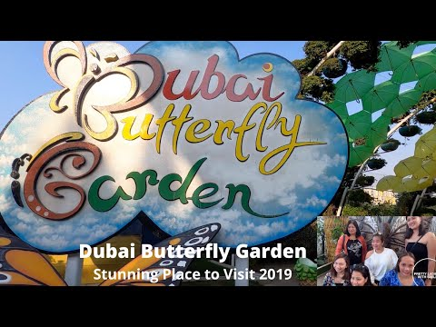 Dubai Butterfly Garden | Dubai Miracle Garden | Corner Activities
