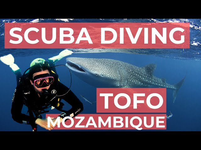 Scuba Diving in Tofo, Mozambique
