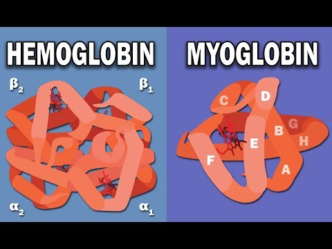 HEMOGLOBIN AND MYOGLOBIN BIOCHEMISTRY