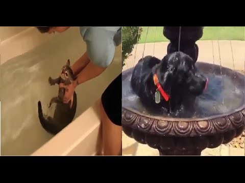 Funny cute Cats and Dogs Love Water 2016 Compilaton